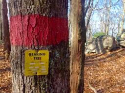 bearingtree